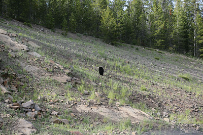 Day 4 2014-06-25 Wed: 04 Black bear 105