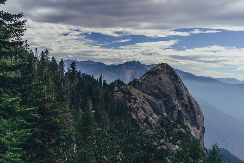 Rui in Sequoia-07065.jpg