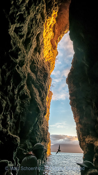 Galapagos III - Urbina Bay &Tagus Cove, Isabela