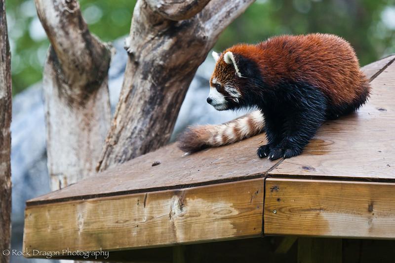 zoo_june4-2.jpg