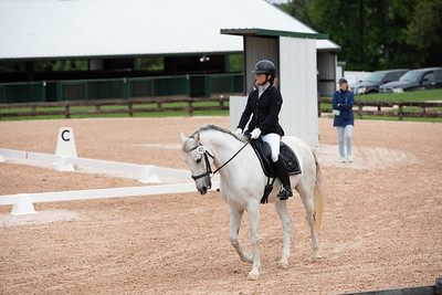 Horse 401