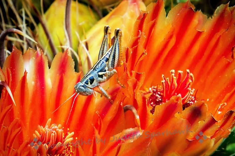 Grasshopper Heaven