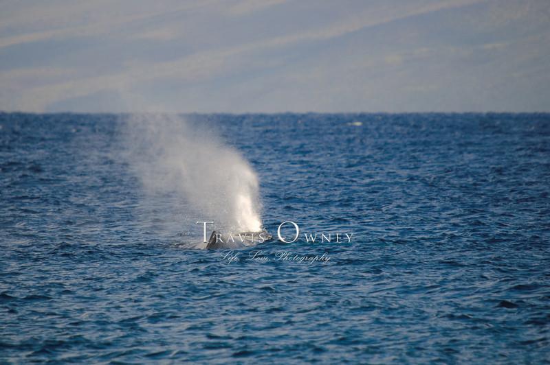 2010 Maui-114.jpg