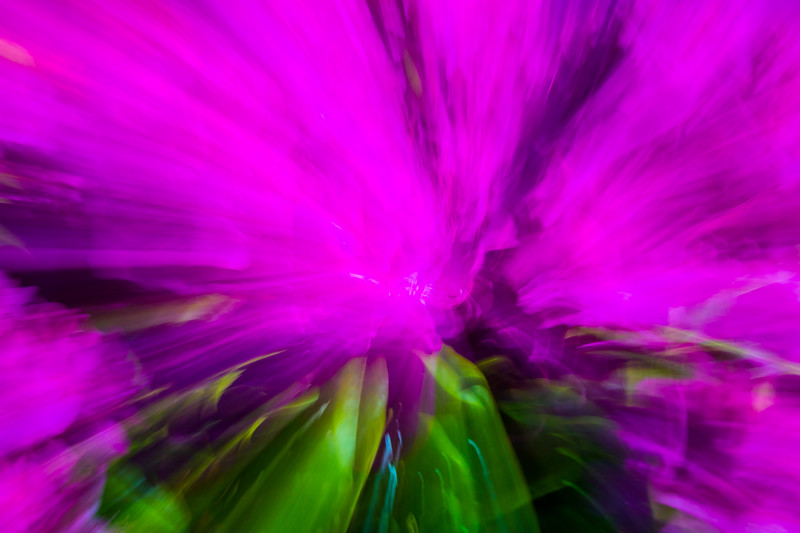 Purple flowers are blurred and warped in an abstract pattern