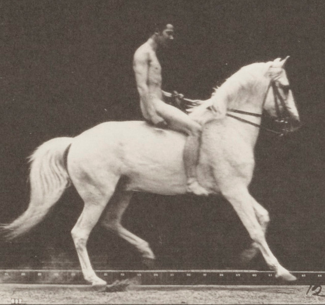 Horse Clinton cantering, bareback with nude rider