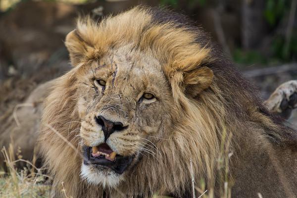 Kurts 2017 Safari