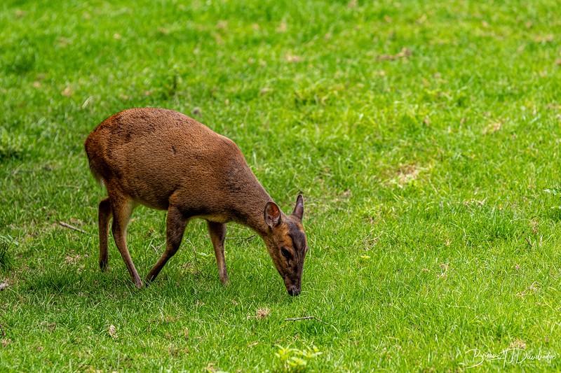 British Wildlife Centre_D850-0010.jpg