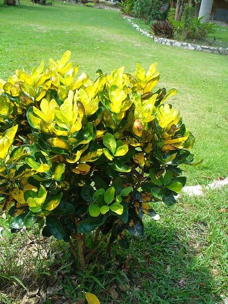 033_Belize_Verdant_Tropical_beauty.jpg