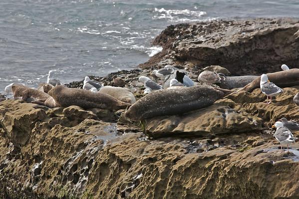 Visiting the Seals