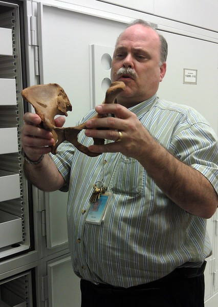 David Hunt, Assistant Collections Manager for the National Museum of Natural History's Department of Anthropology, displays male and female hip bones