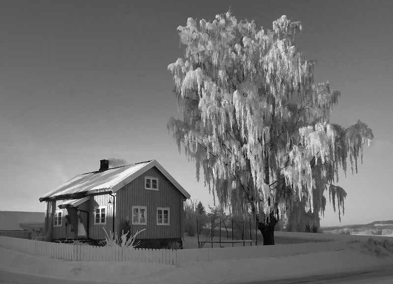 frozenhousetree.jpg