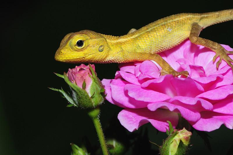 Lizard-and-Flower.jpg