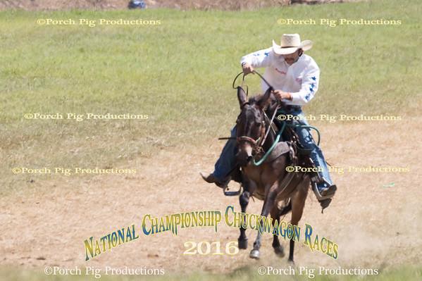 Saturday Mule Race  2016 National Championship Chuckwagon Races