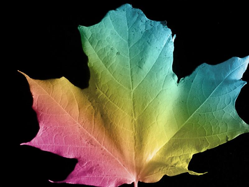rainbowleaf.jpg