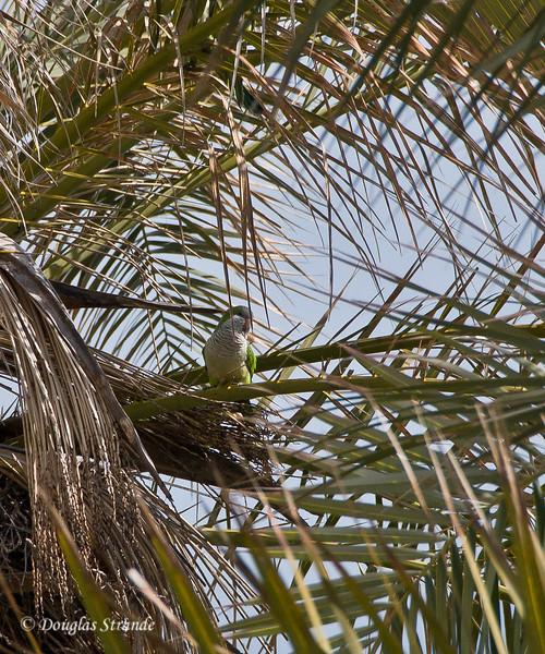 Sat 3/12 in Torremolinos (Costa del Sol): Parakeet