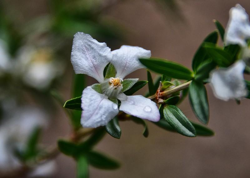 NEA_2163-7x5-Flower.jpg