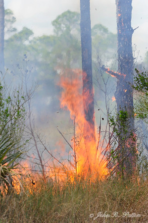 Big Cypress National Preserve prescribed fire