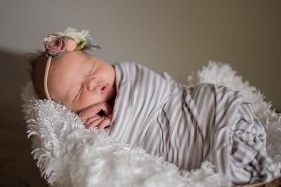 Saylor Newborns
