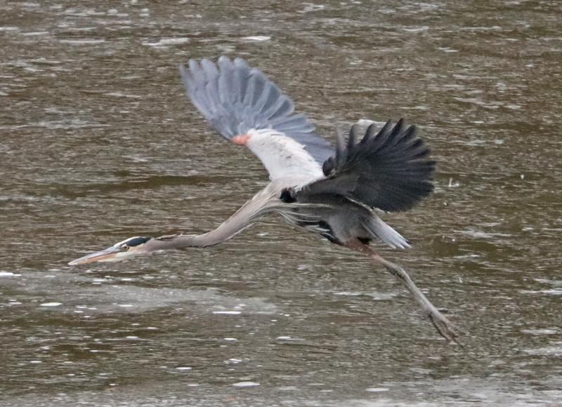 Heron 91