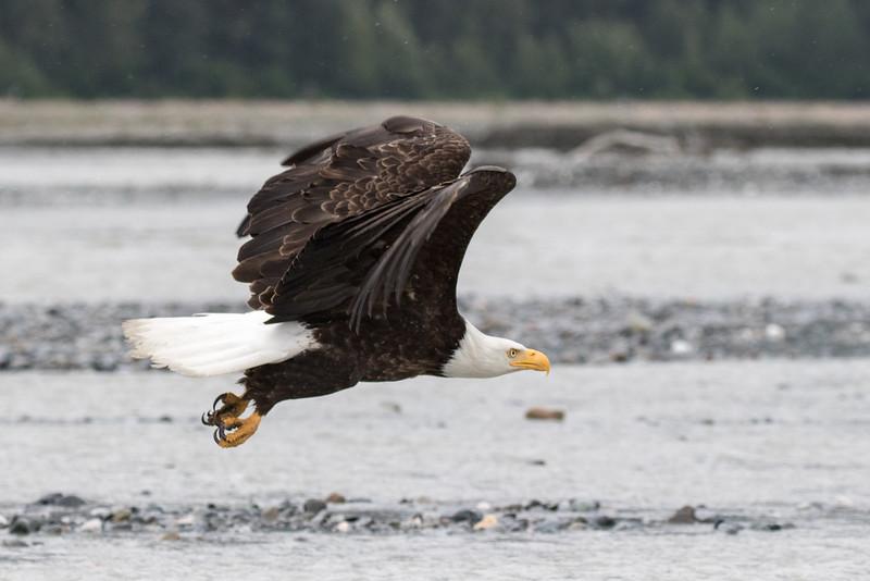 Alaska 2015 - Skagway -  072715-068.jpg