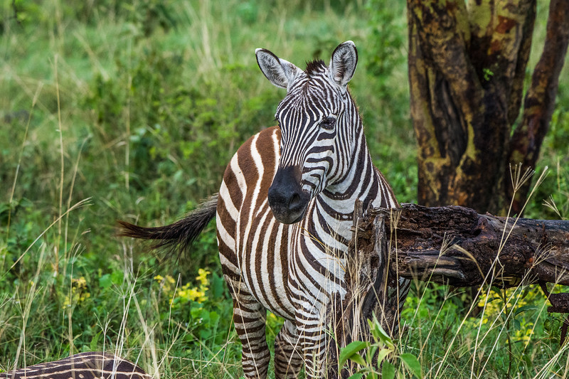 Kenya-0210.jpg