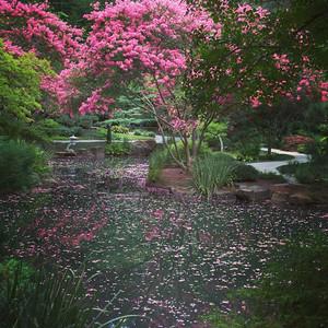 2014/08/02-1 - Gibbs Gardens