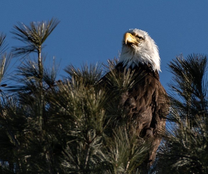 Eagle looking up