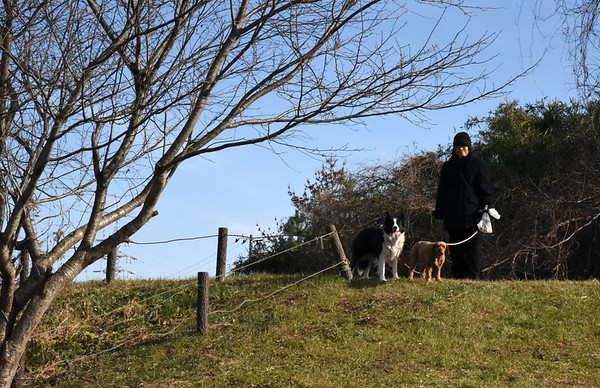 DOG-WALK IN MORIYA - 6 Jan 2016 (26)