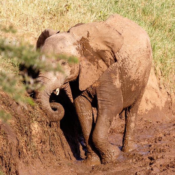Kenya 2015-01021.jpg
