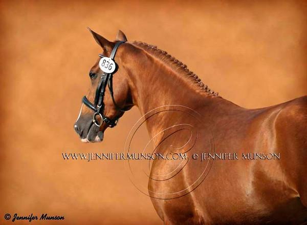 Custom Equine Art