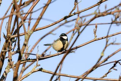 2014 Birds in the backyard