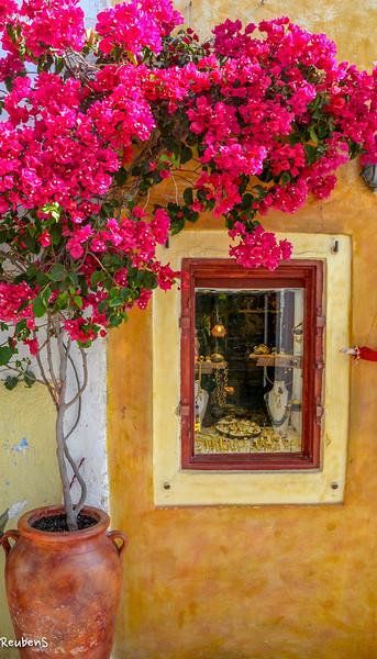 Bougainvilla at window.jpg