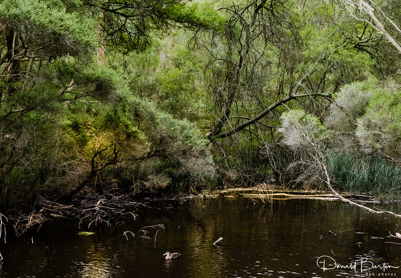 Gardiners Creek Billabong