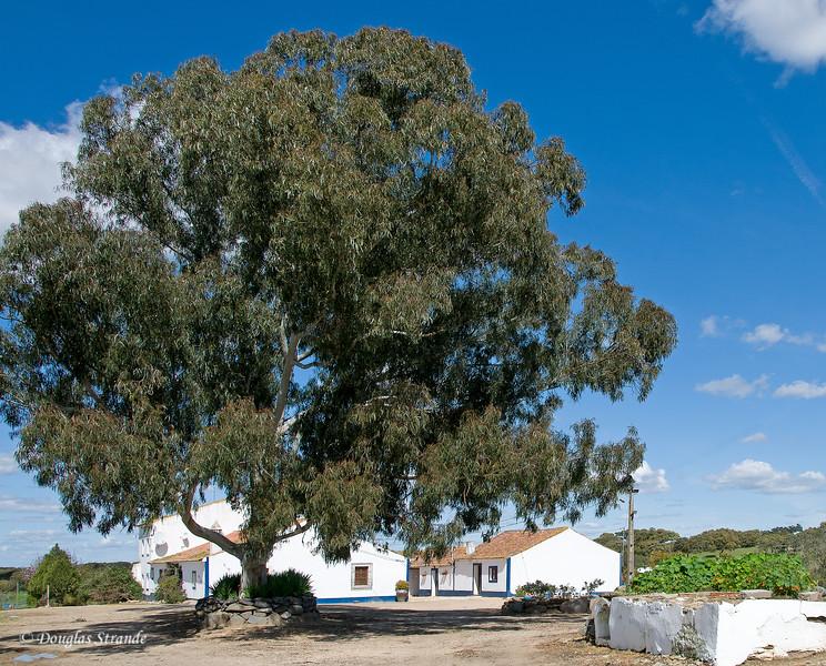 Wed 3/16 at the horse-breeding farm: A nice shade tree