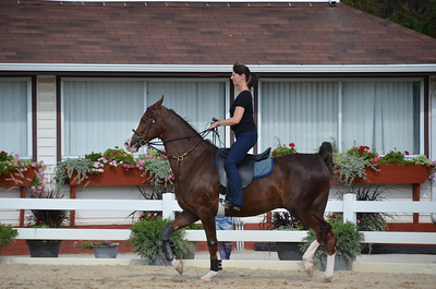 Texting While Trotting