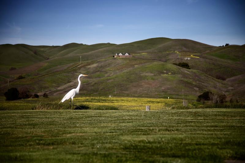 artesa stork.jpg