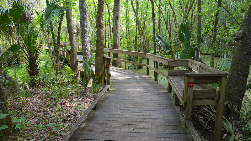 Bench along the Fern Garden Trail boardwalk
