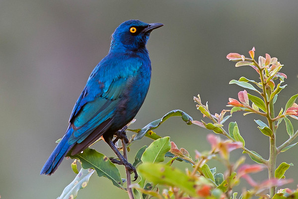 Birds of Southern Africa - 2014