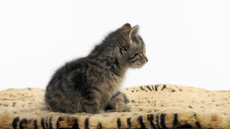 kitten_306_02.mov