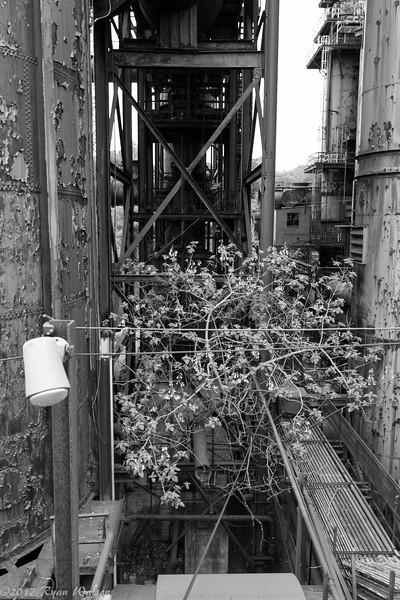 Hoover Mason Trestle-3.jpg