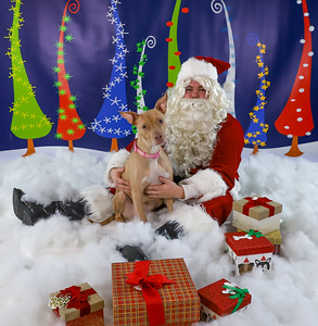 Alan Davis - Pet Pics with Santa