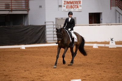 Horse 158