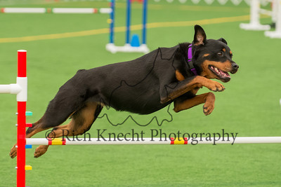 Dauphin Dog Traing Club AKC Agility Trial April 12-14