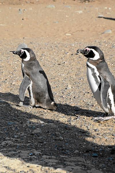 Penguin_Colony_049.jpg