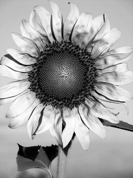 amh FLOWERS (1939).jpg