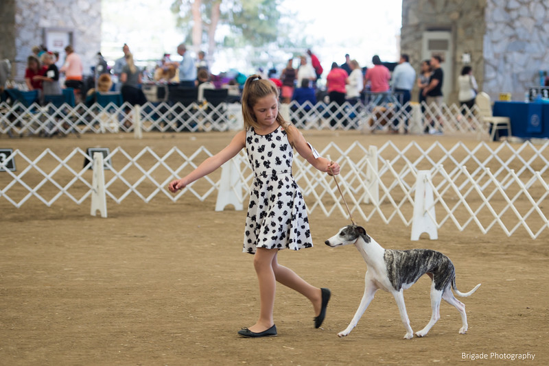 2019 Malibu Kennel Club-0221.jpg