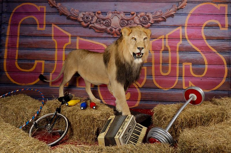circus set.jpg