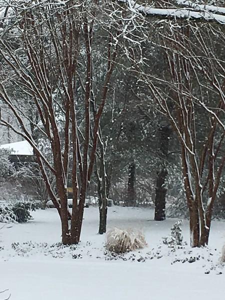 Perhaps my favorite snow tracings