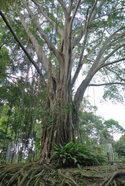 Bukit Timah and Hindhede Nature Reserves