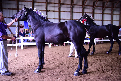 GC Stallion